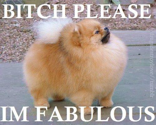 Fabulous bitchees. . i want fabulous