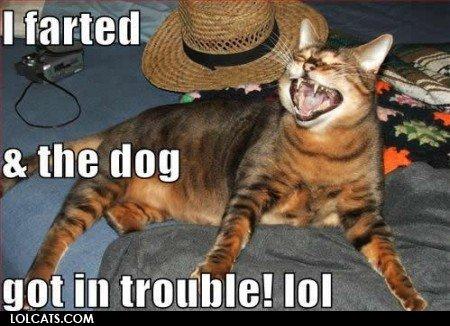 Farting Cat. Lol!!! But r u sure it wasnt u???. started a. me any got in trauma! lo! CDM. LOL Cats Dogs Fart funny lol