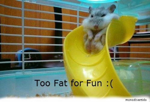 [ Alliance #1 ] Strip comics de groupe! Titre projet: (_?) Fat+hamster_1085fc_3590552