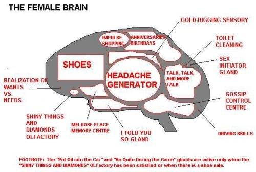 "females brain. . THE FEMALE BRAN season? TOILET TDH GIAND WANTS NEEDS CONTROL cairn: sum THINGS Hum mm m. FACTORY ""I"" N. gottry tatt. "" thtt tilt: -Mania-."