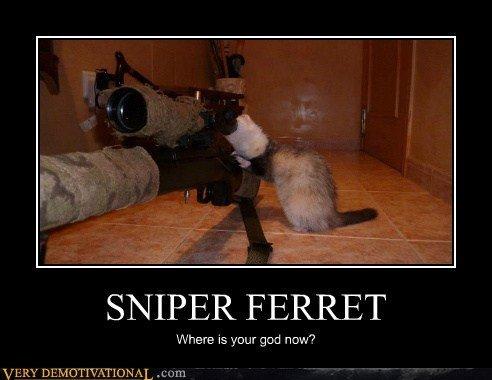 ferret. . SNIPER FERRET. he's in the kitchen making a pizza.