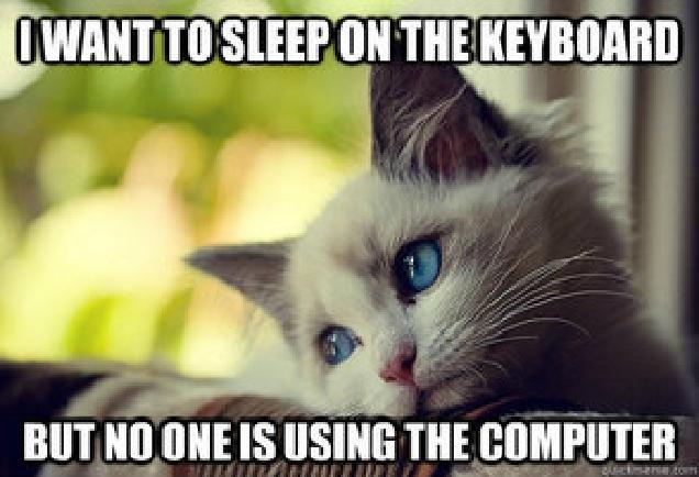 First World Problems Cat. Poor kitten. inn Ill