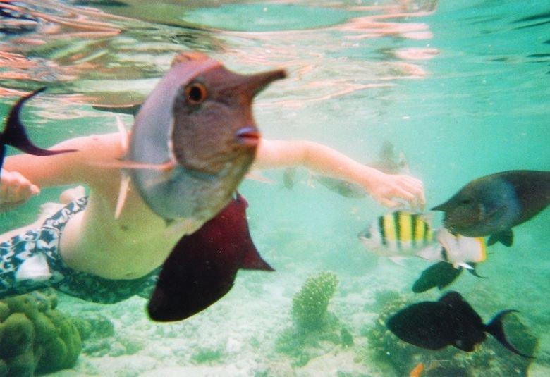 Fishman. OC, taken at the Maldives... The next step? Anybody?
