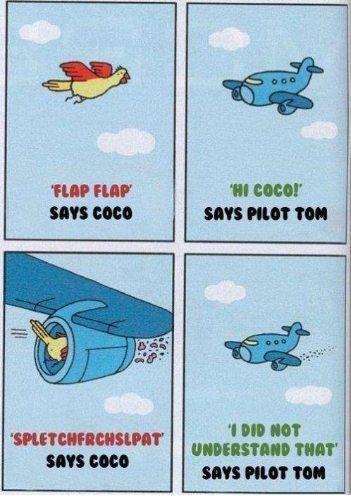 "Flap Flap (Says coco!). oh coco.... FLIP FIJI?' 'III ""latt' SIN PIG? 'MI. OH GOD WE'RE GOING DOWN!!!! says pilot Tom"