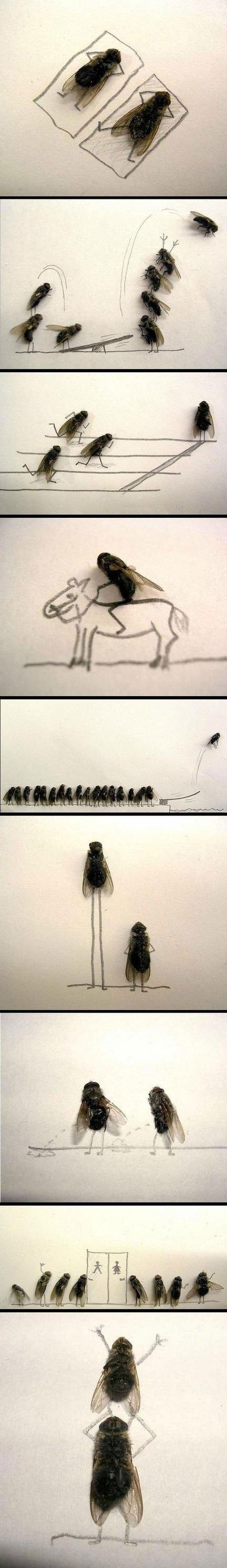 Fly art?. Uh yeah...I didn't do this but it's weird so..... Wierd..hobby?