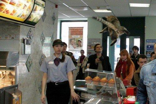 Flying Cat. .. yeah McDonalds interesting Flying cat Jump