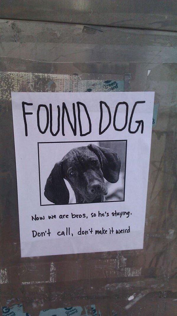 Found a Dog. .