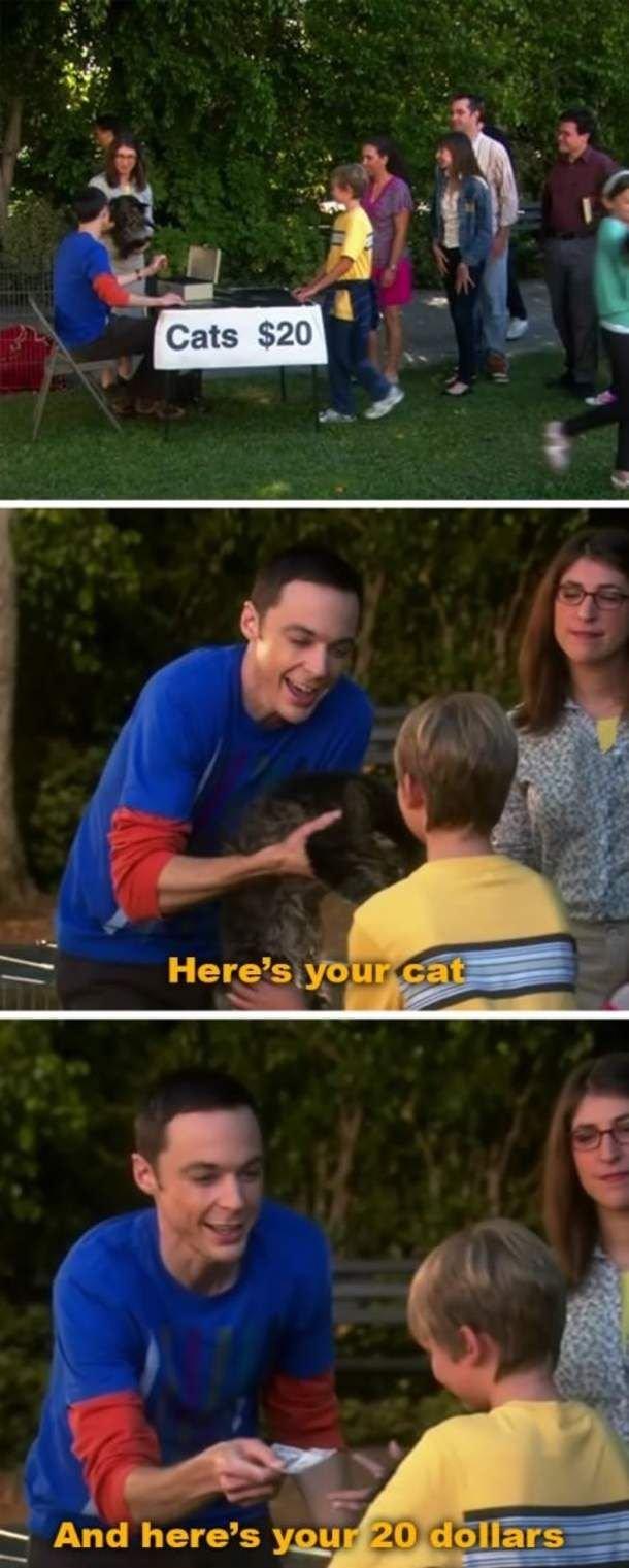 Free Cats. .