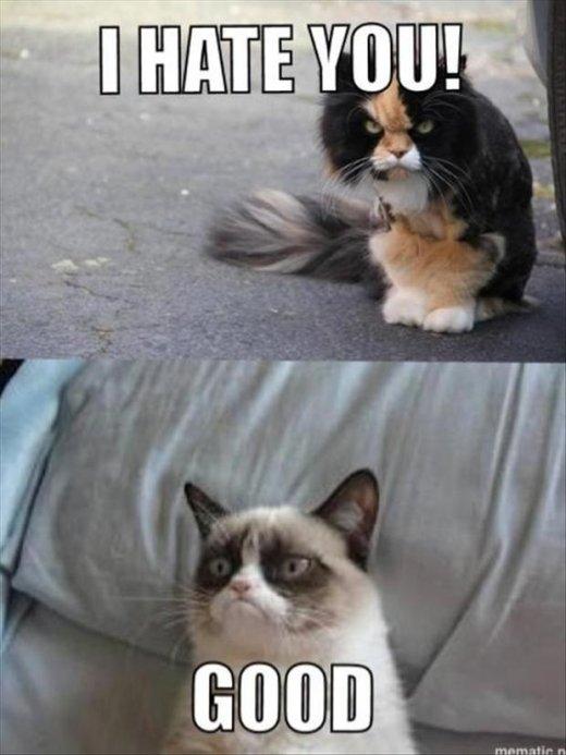 friends. . Cats friend Good