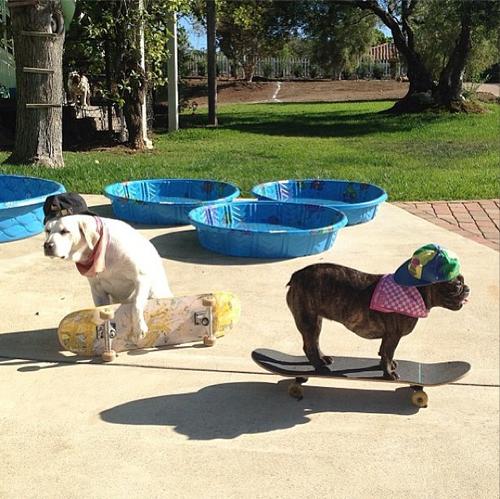 Fuck school. The dog days of summer.. lol LMAO omg funny