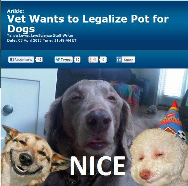 Fuck Titles. Sauce www.livescience.com/28477-marijuana-for-dogs.html.. hell yeah