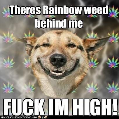 Fuck im High. My 1st High Dog be nice and thumb up. rainig; vi , fuck im High