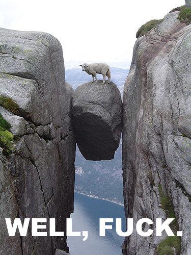 Fucked Sheep. .. ;p Beastiality FTL