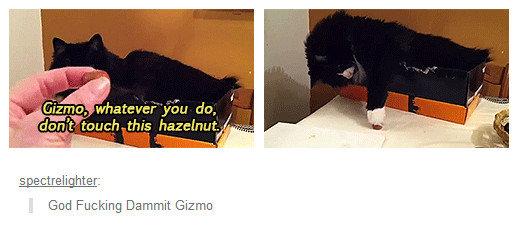 Fucking Rebel. Asshole cat doesn't listen very well.. spect_ relight_ er: God Dammit Gizmo God dammit GIZMO