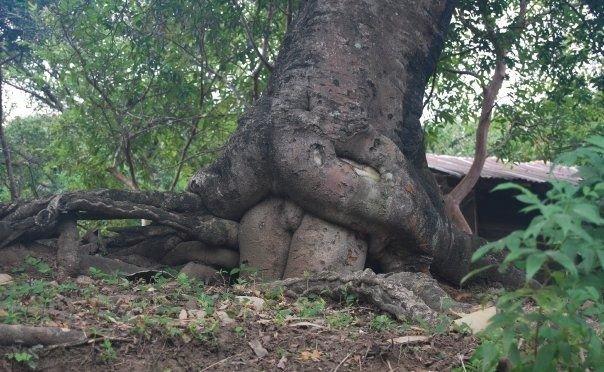 Fuck On Tree 69