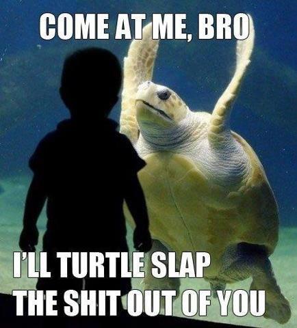 Fucking turtles man.... .