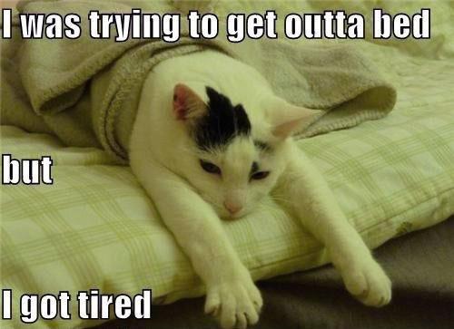 Funny Lazy cat. Funny Lazy cat.
