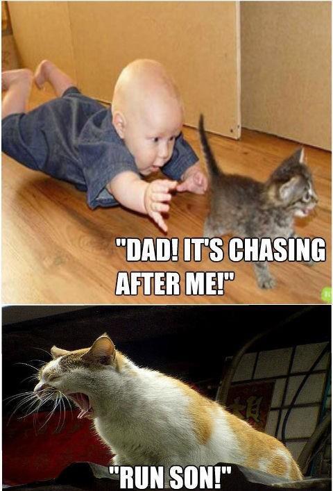 funny baby and cat. funny baby and cat. cat baby Kitten funny pet animal