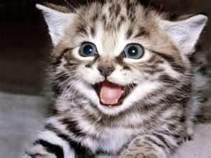 funny cat. funny cat.