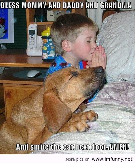 funny dog. .