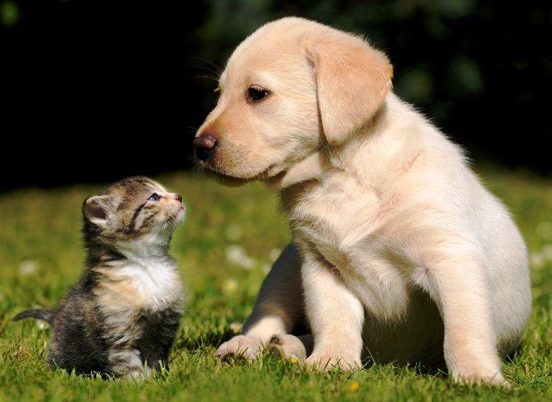 funny friend. . funny friendship Love lol cat Dog