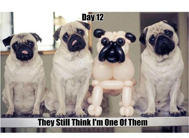 Funny Jokes. .