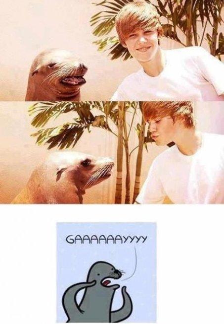 GAAAAAAAAAAAAAY. I am beating dead horse.. What the seal was hoping for