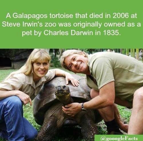 Galapagos. .