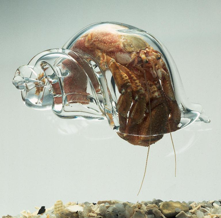 Glass Shell. Lucky .