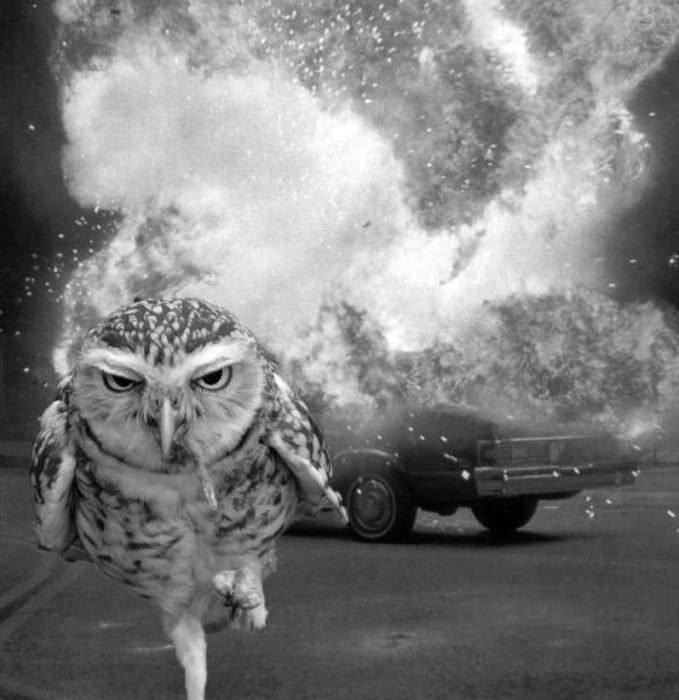 Go ahead...laugh owl you want.. lolol.