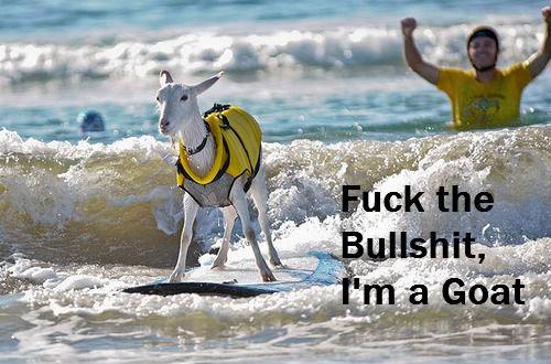 Goat. .