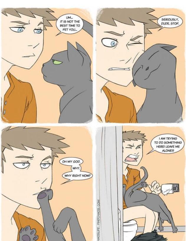 God Damn Cats. [insertacleverdescriptionhere].. Well it's his revenge.