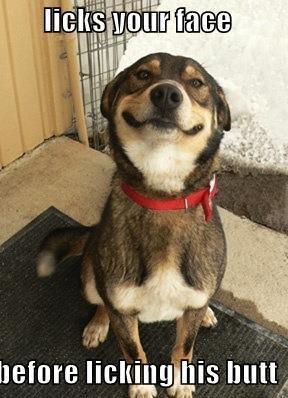 Good Dog Greg. Just a dog that is loyal ^.^. otitis [snug Inmate Good Dog Greg bu