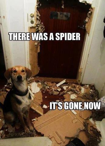 Good dog. .