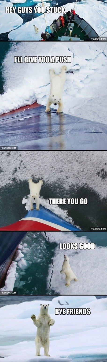 good guy bear. . stif UM M. The most Canadian polar bear ever.
