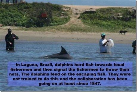 good guy dolphin. . human Birtday, haul '. reat local c- E.. Emma it'd than signal its ' 'Muir j.- er- nah. Thu an till scanning fish. 'rhey. amuro u not : I. h