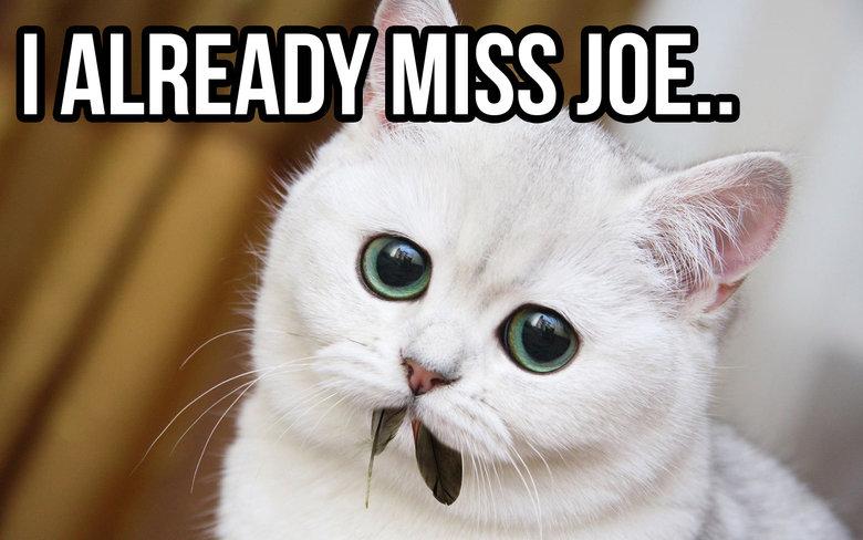 Good old Joe. FRESH OC.