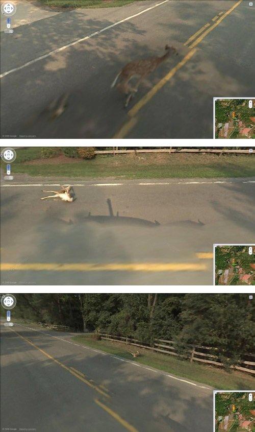 Google ran over bambi. Obviously found on google earth.. >'bambi's mom is kill' >'no' Holy fuck Google hit Bambi