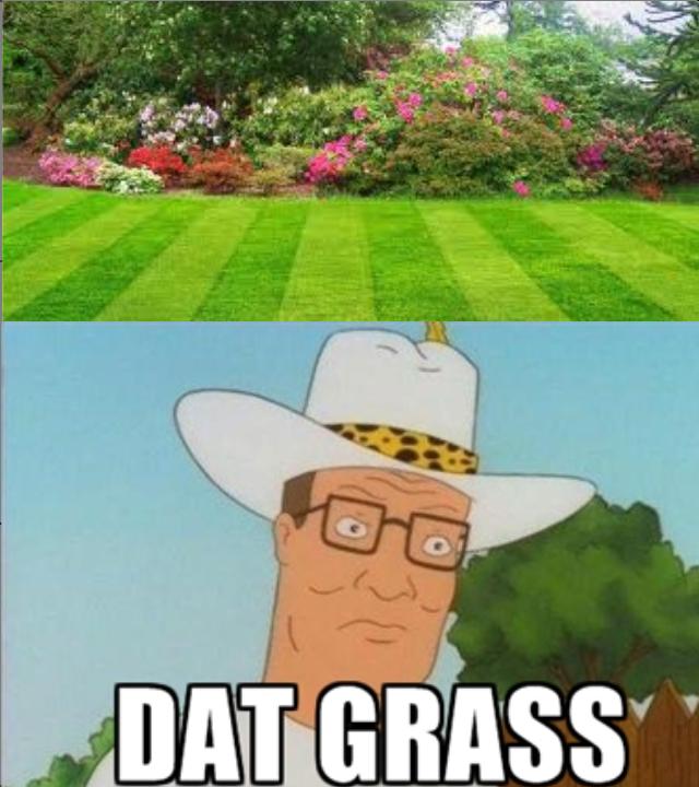 GRASS. hanks knows.