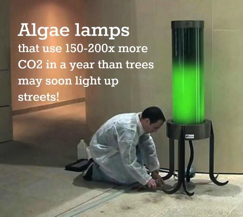 Green Lamp. not oc. algae lamp Love