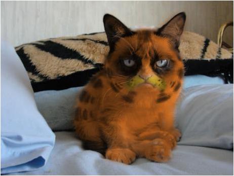 Grumpfield. LOL. grumpfield Grumpy cat garfield