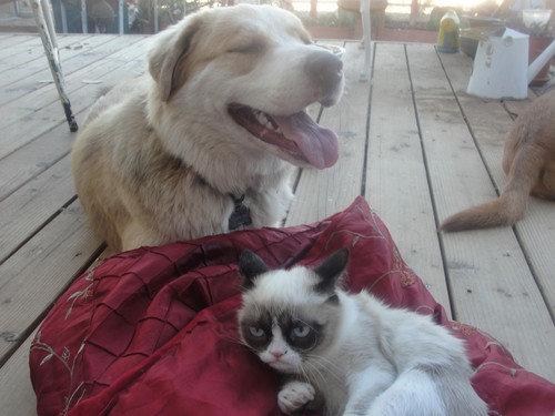 Grumpy Cat meets happy dog. .. I smell a sitcom!