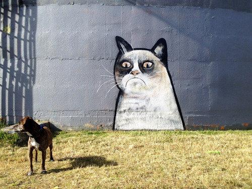 Grumpy cat graffiti. Grumpy cat graffiti sighted in Auckland at a dog park.. Grumpy cat meme Graffiti Dog Park auckland