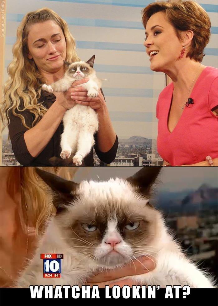 Grumpy cat on FOX. . Grumpy cat is