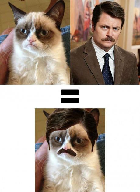 Grumpy Cat + Ron Swanson. .. i don't get it... first cat... then rob swanson... and then rob swanson again.... please explain.... cat ron swanson