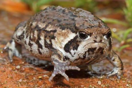 Grumpy cat's friend, grumpy frog!. .