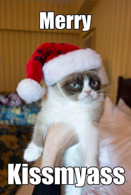 grumpy cat. .