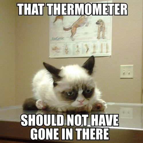 Grumpy cat. . nun IRVINE lit Til