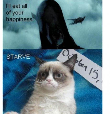 grumpy cat. . STARVE'.
