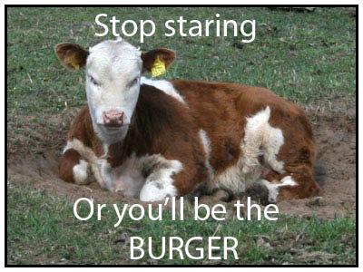 Grumpy cow. . s Op staring if h Ofyou' I be the BURGER . grumpy cat grumpy cow